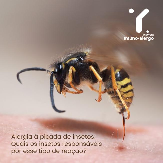Alergia à picada de insetos